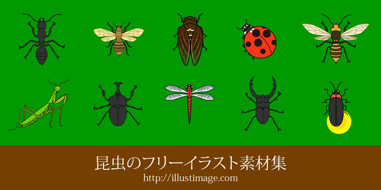 まとめ】昆虫の無料イラスト素材集|イラストイメージ