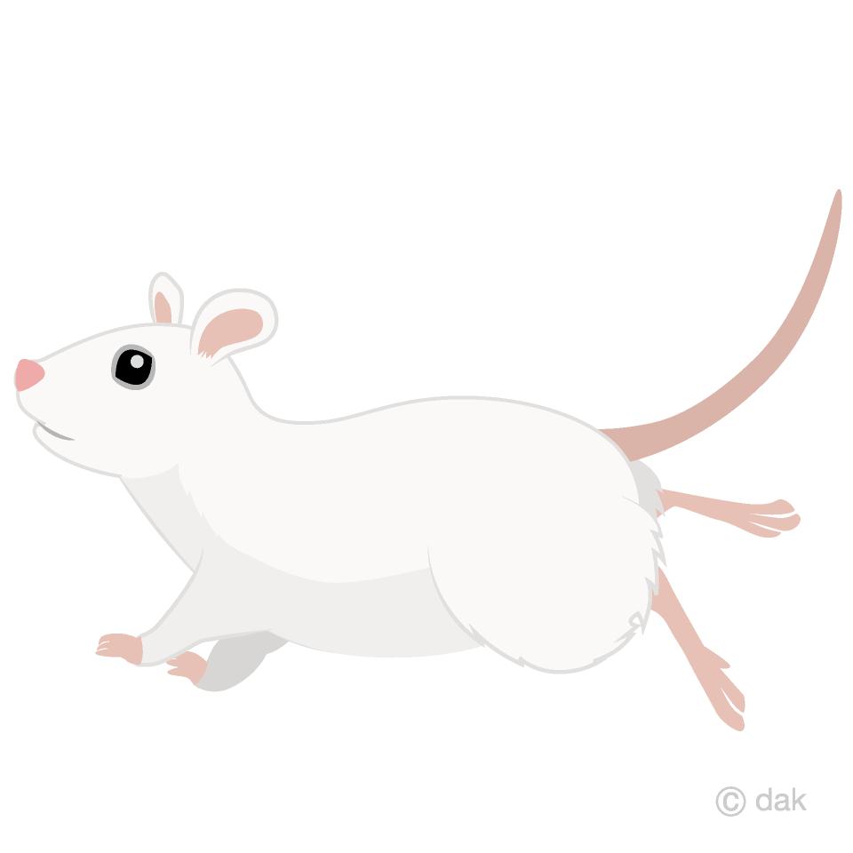 走る白鼠横の無料イラスト素材イラストイメージ