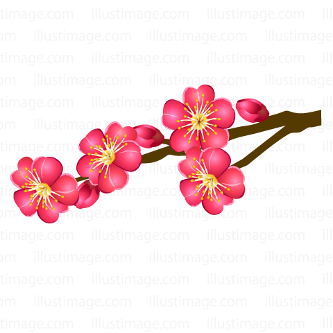 Plum blossoms blooming in tree branches