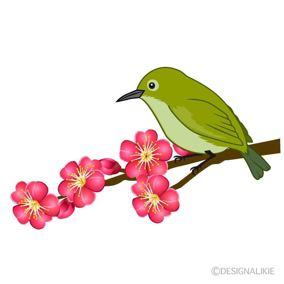 梅の花とウグイスの無料イラスト素材 イラストイメージ
