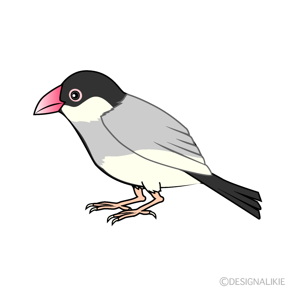 文鳥の無料イラスト素材 イラストイメージ