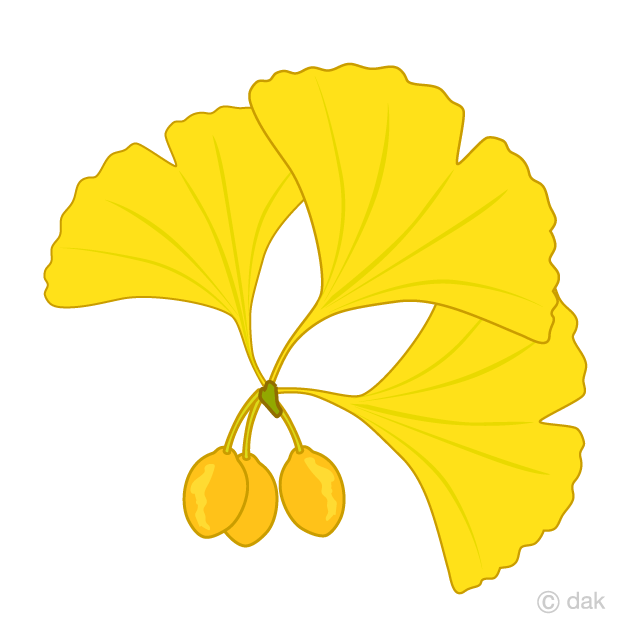Gingko and ginkgo clip art