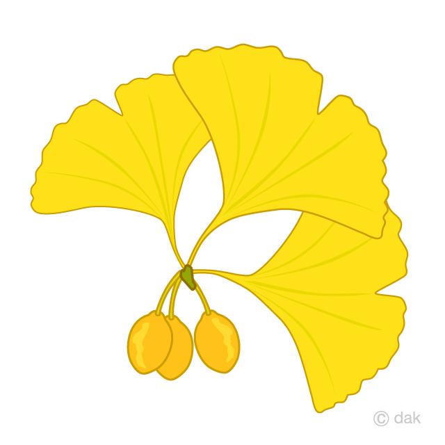 イチョウと銀杏の無料イラスト素材イラストイメージ