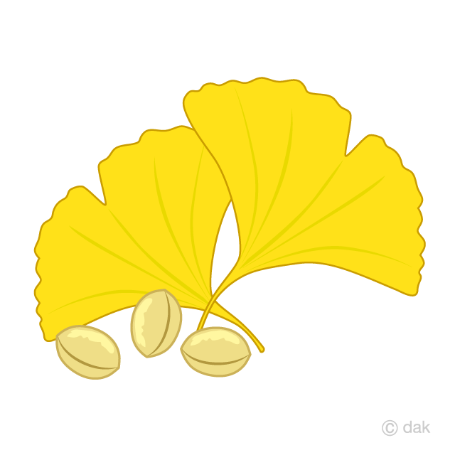 Fallen leaves and ginkgo clip art