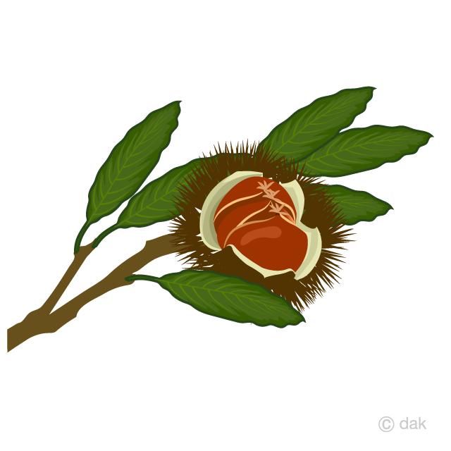 栗の木の無料イラスト素材イラストイメージ