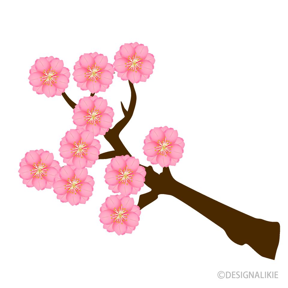 桃の花の無料イラスト素材イラストイメージ