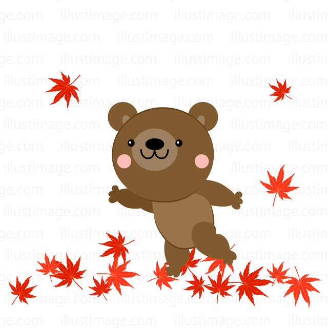 Bear to see the autumn leaves