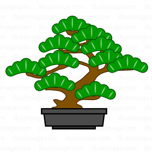 盆栽の松の無料イラスト素材イラストイメージ