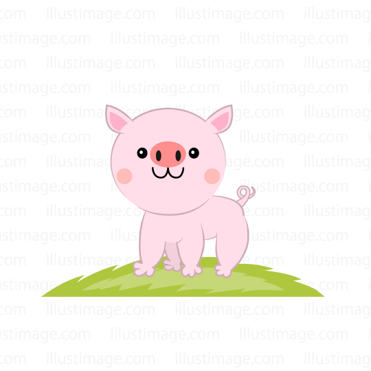 Cute pig in the field