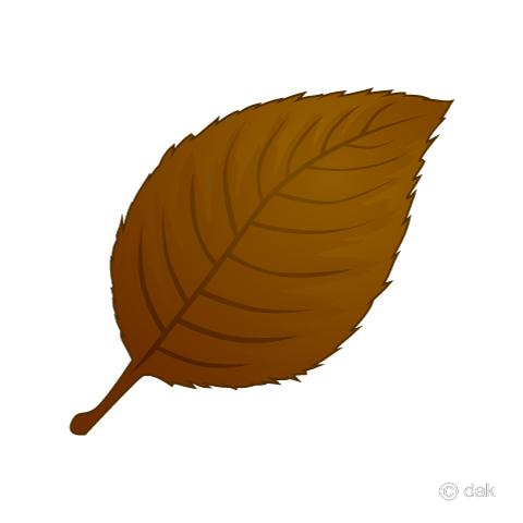 落ち葉の無料イラスト素材 イラストイメージ