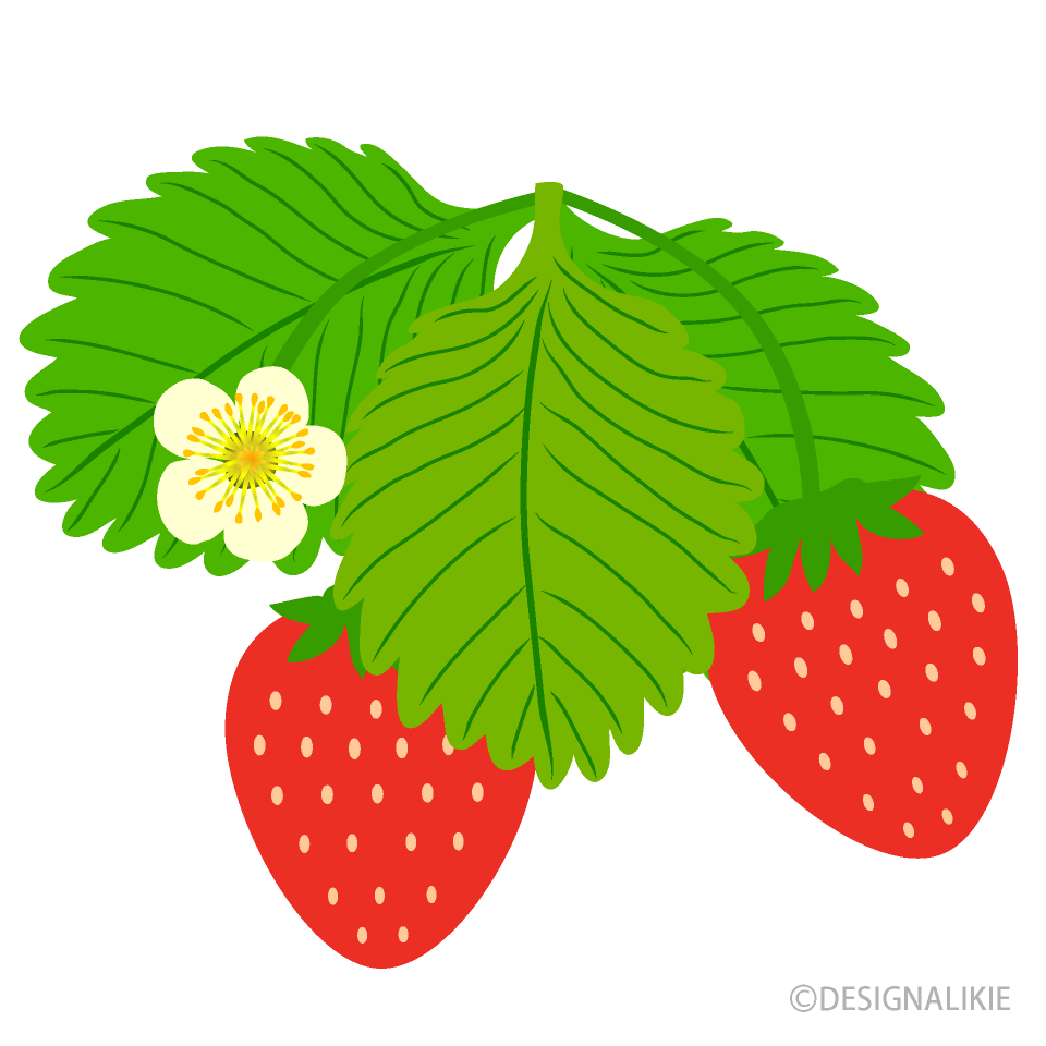 Strawberry flower