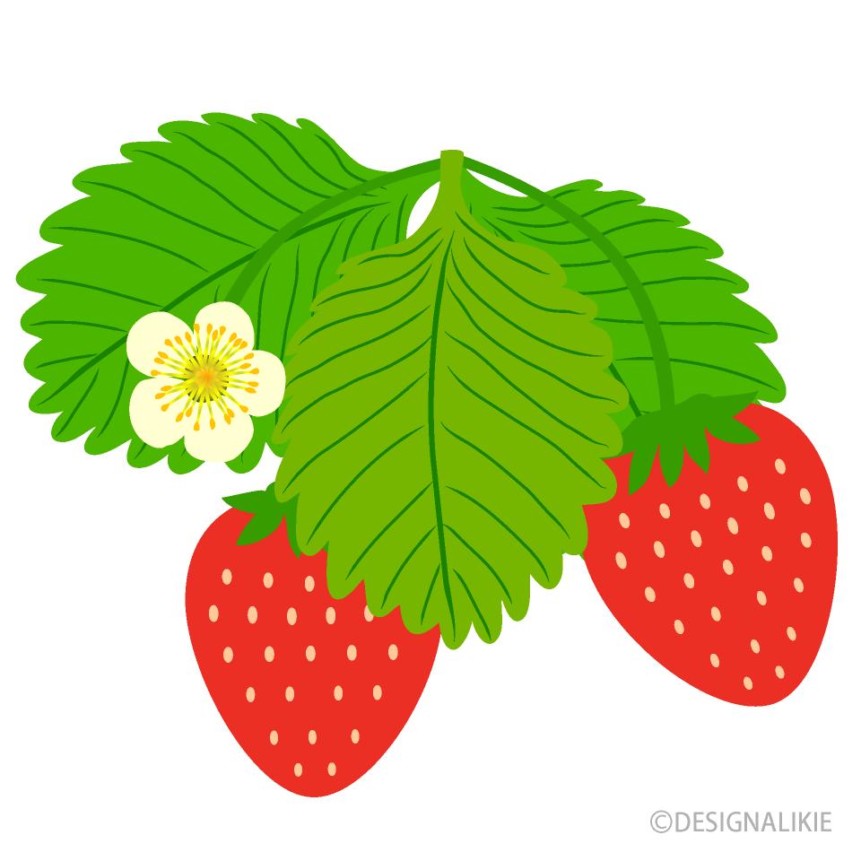 イチゴの花の無料イラスト素材 イラストイメージ
