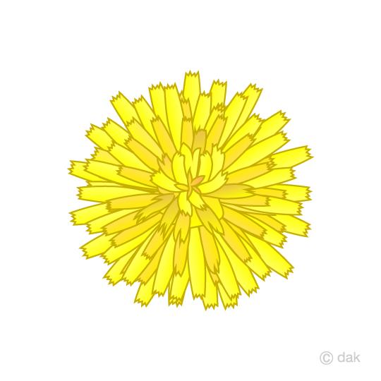 たんぽぽの花 びらの無料イラスト素材イラストイメージ