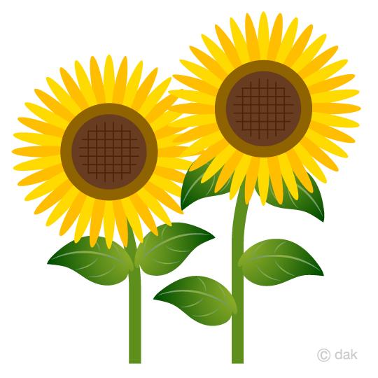 夏のヒマワリの無料イラスト素材イラストイメージ