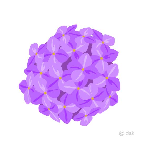 あじさいの花の無料イラスト素材イラストイメージ