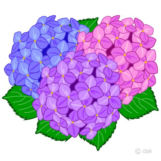 カラフルな紫陽花の無料イラスト素材イラストイメージ