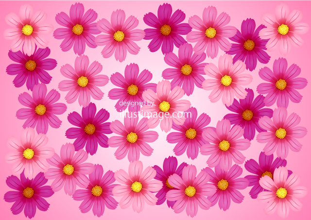Cosmos flowers on one side wallpaper