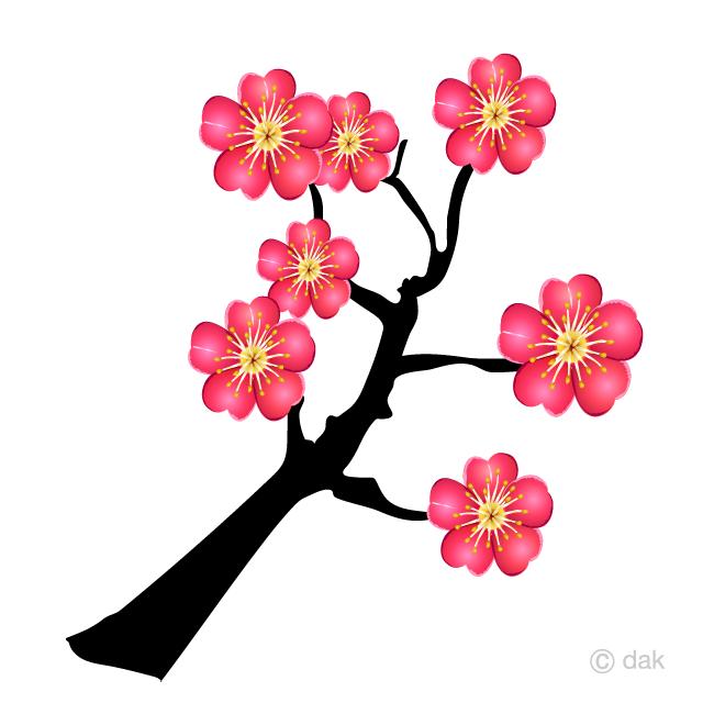 木に咲く梅の花の無料イラスト素材イラストイメージ