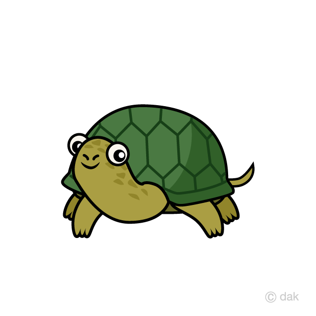 Turtle seen from the front
