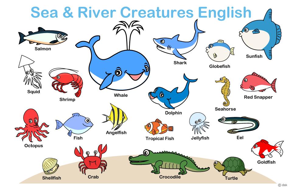子供の魚英語教材の無料イラスト素材イラストイメージ