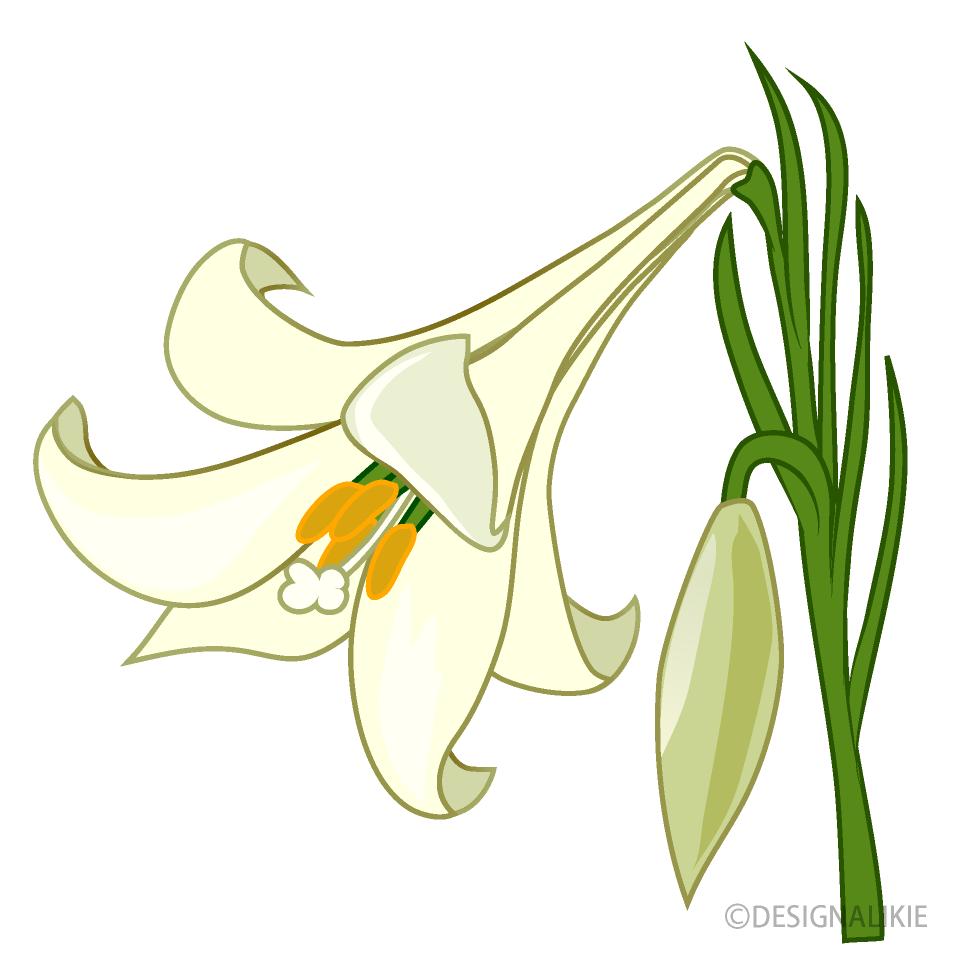 白いユリの花の無料イラスト素材イラストイメージ