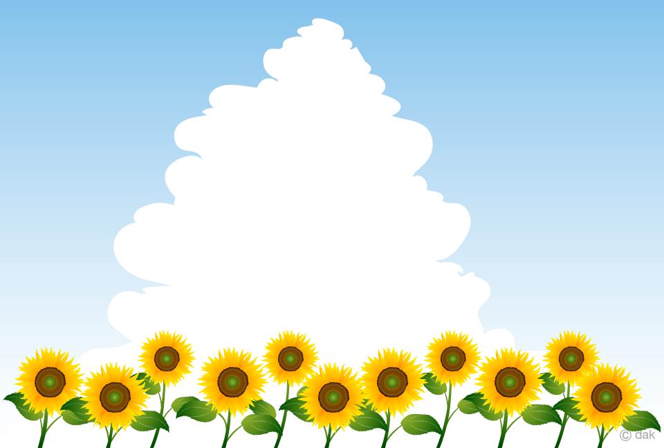 ひまわり畑と入道雲