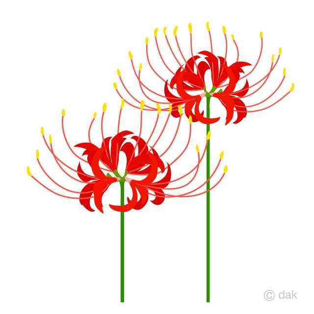 秋の彼岸花の無料イラスト素材 イラストイメージ