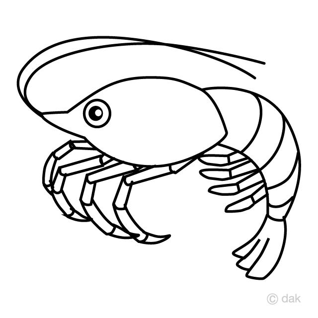 エビ 線画 の無料イラスト素材 イラストイメージ