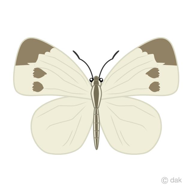 モンシロチョウの無料イラスト素材イラストイメージ