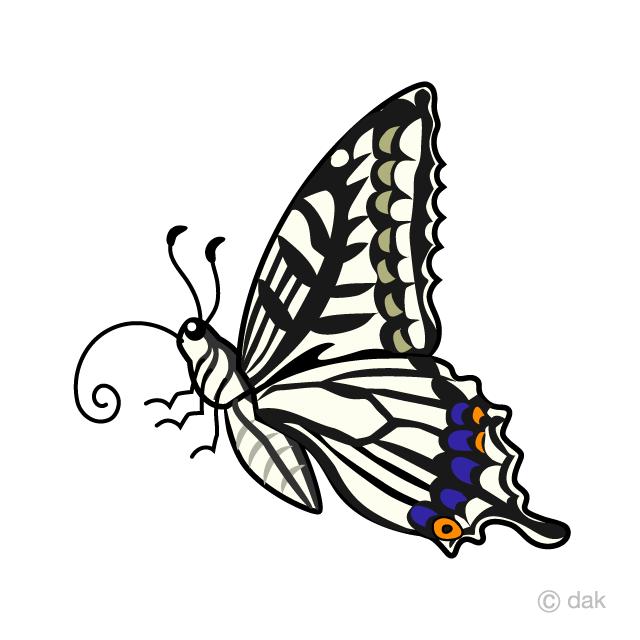 アゲハチョウ横の無料イラスト素材イラストイメージ