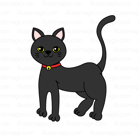 Pet black cat