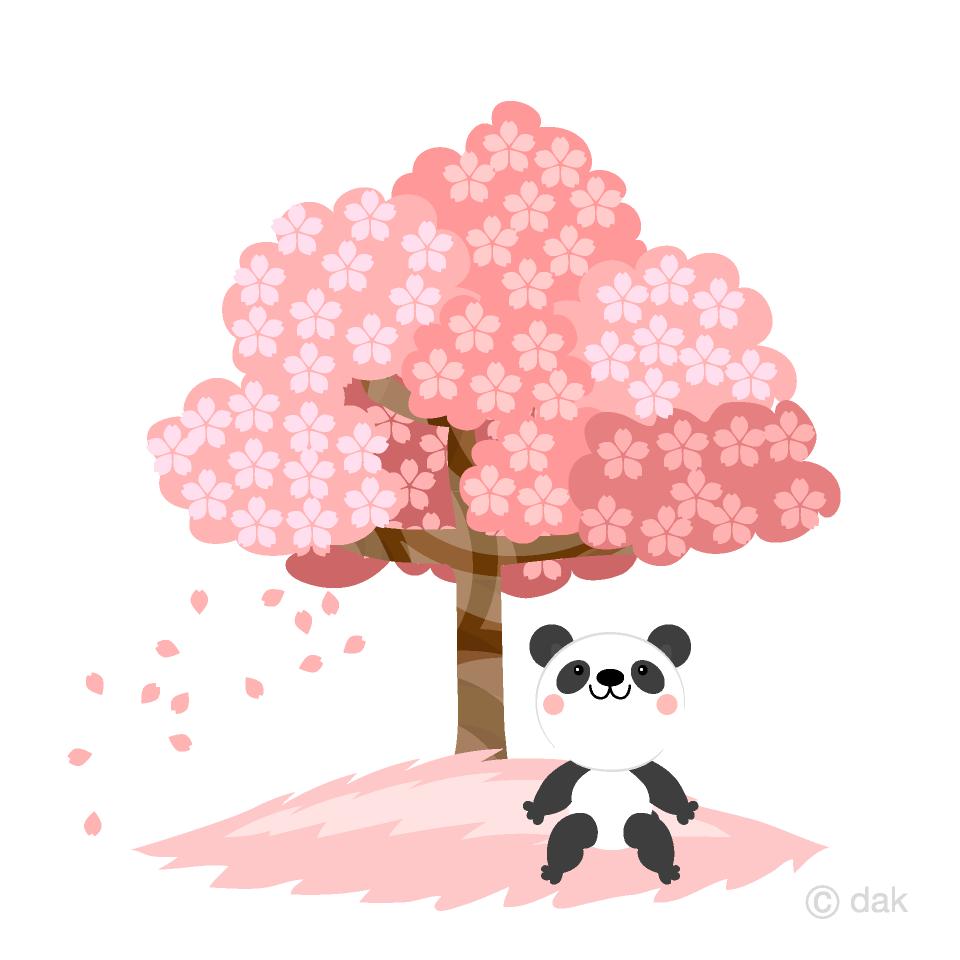 お花見するパンダの無料イラスト素材イラストイメージ