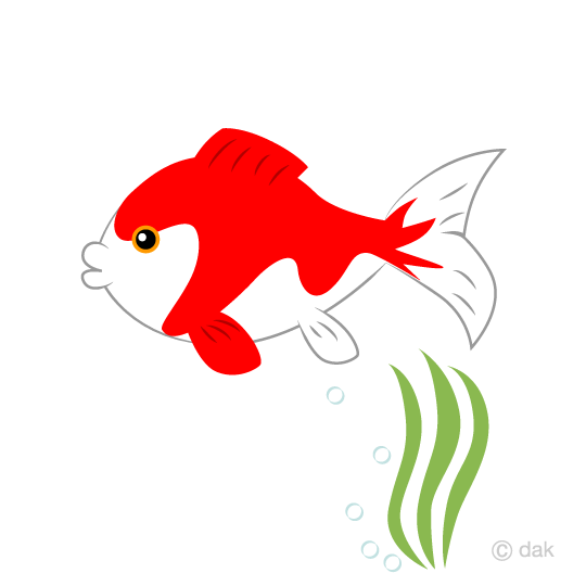 Cute goldfish