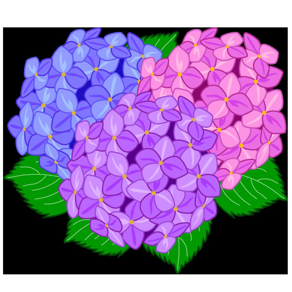 free colorful hydrangea clip art image free cartoon clipart rh illustimage com