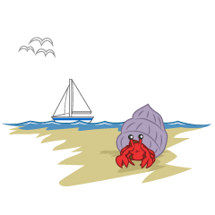 Hermit crab at the beach