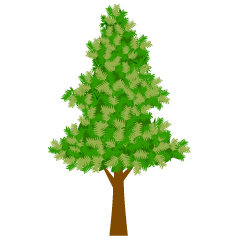Fir Tree clip art