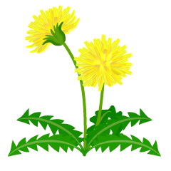 Dandelion from the side clipart