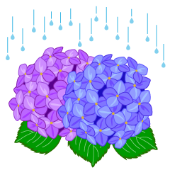 Hydrangea clipart of the rainy season