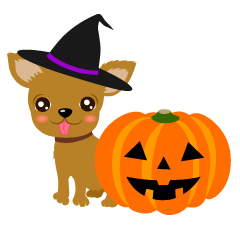 Chihuahua and Halloween pumpkin