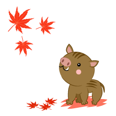Seeing autumn leaves Wild Boar