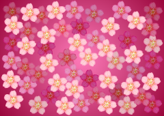 Cherry blossoms on one side wallpaper