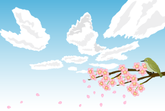 Cherry blossoms and spring sky