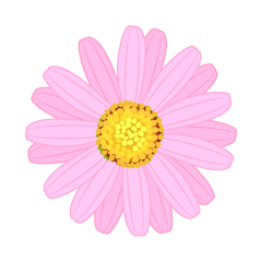 Pink Marguerite Flower