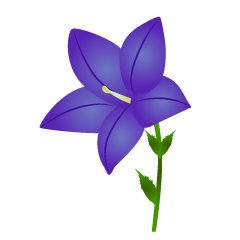 Bellflower flower