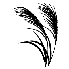 Miscanthus sinensis silhouette