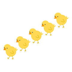Chicks walking in rows